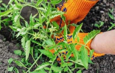 activities_gardening-ne2q2dt11afih1v95mk3xgcs3nspzuhy9ccuo7z5u0