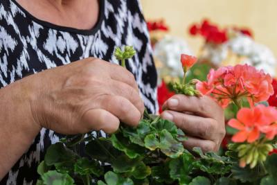 erdington care home with garden