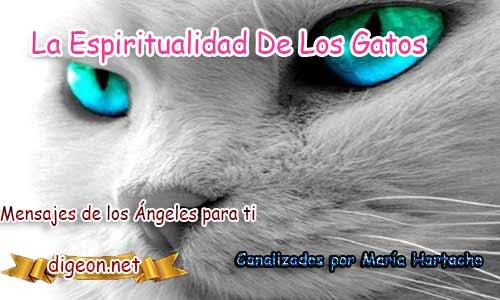 Conoces la espiritualidad de los gatos? LA ESPIRITUALIDAD DE LOS GATOS y todo sobre los gatos, sus costumbres, y modo de relacionarse con las personas