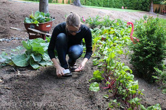 planting seeds in garden