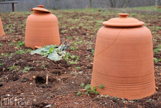 terra cotta garden cloche