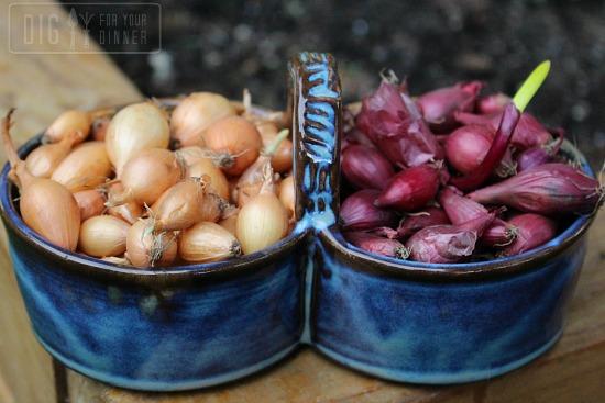 onion bulbs