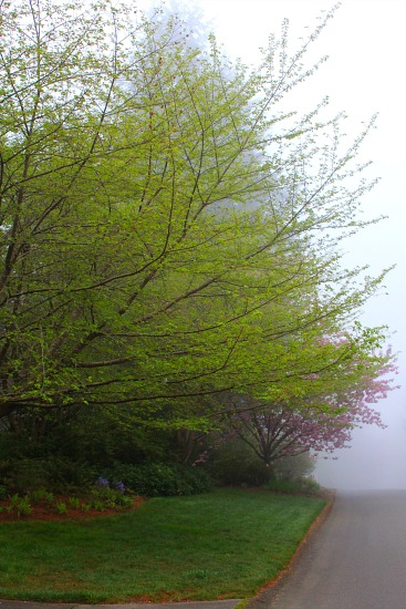 chery tree