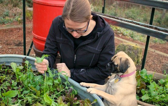 lettuce-lucy-the-puggle-dog