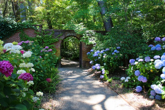 hydrangea garden path