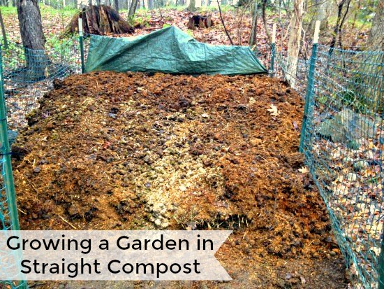 Growing a Garden in Straight Compost