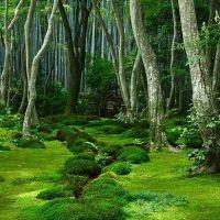 Moss Garden, Kyoto, Japan photo via bren