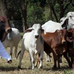 Cattle disease breaks out in Sinazongwe