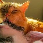 Cat.Love