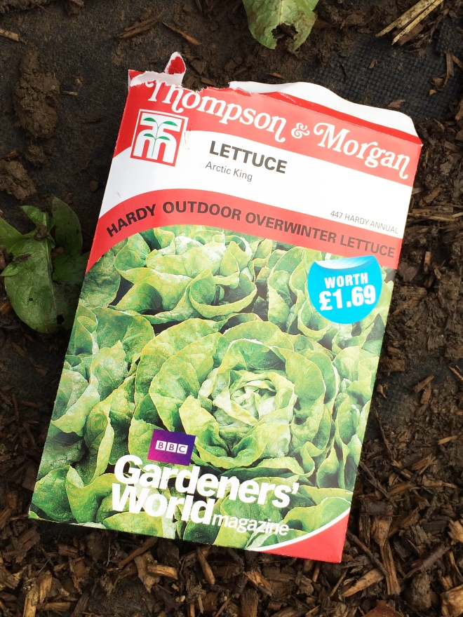 Sowing Arctic King Lettuce