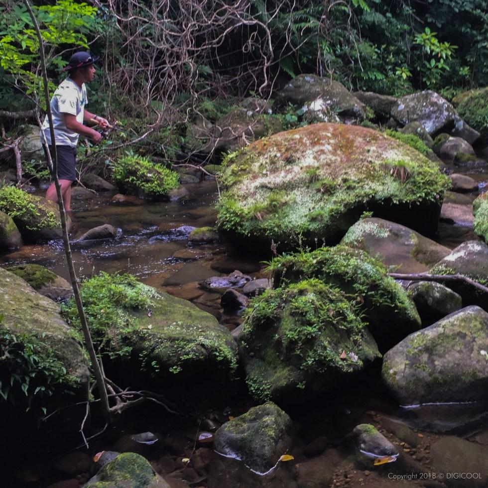 西表の渓流