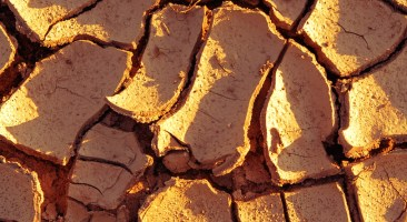 Dry soil. Cracked ground background.