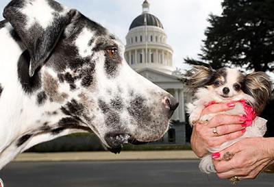 世界一大きな犬と世界一小さな犬のツーショット