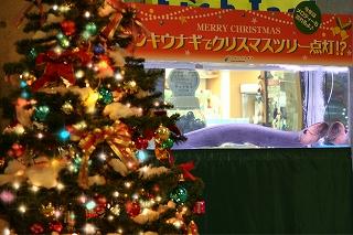 電気うなぎでクリスマスツリーを点灯