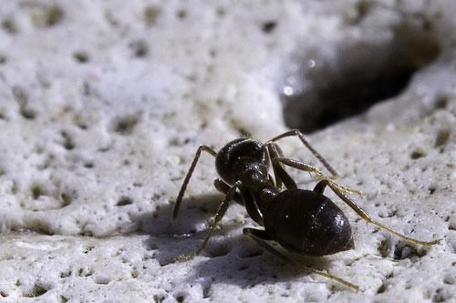 アリはいつ他のアリが死んでいると判断するのか?