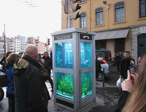 小さな水族館になっている電話ボックス。電話はかけられません
