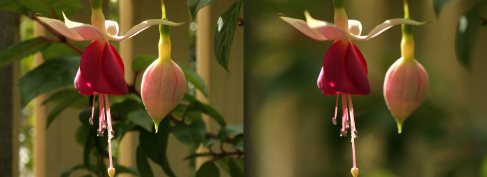 Side by side aperture depth of field example.