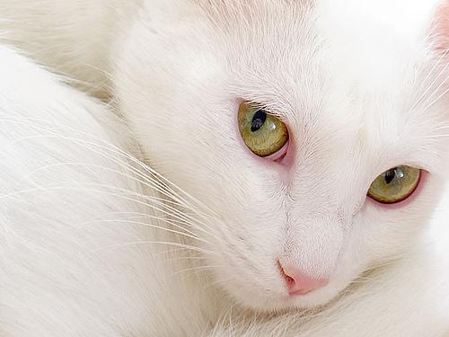 gato abstrato close-up da cabeça