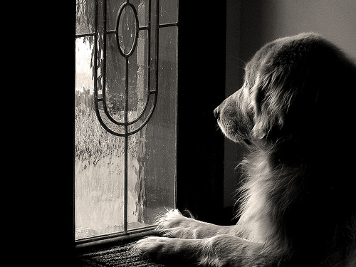 Photography-Pets-4