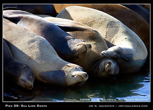 101806_sea_lion_siesta_500cc.jpg