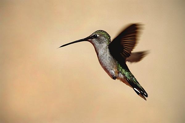 high-speed-photography-8.jpg