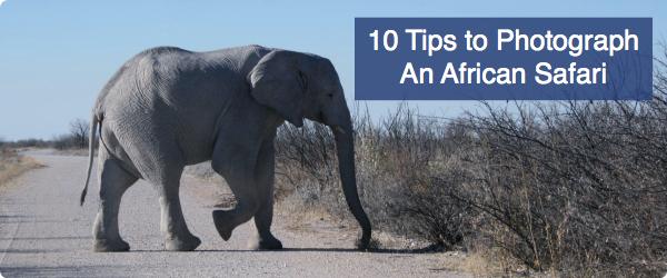 10 Tips to Photograph An African Safari