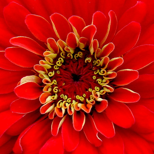 Flower macro photography. Image by macropoulos