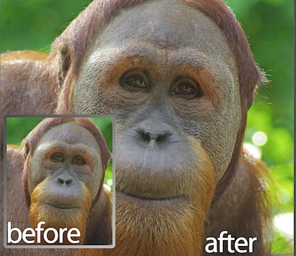 PSEM_before_after.jpg