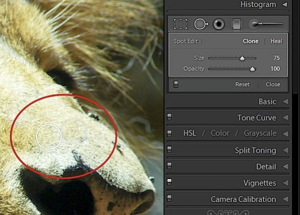 spot_step2.jpg
