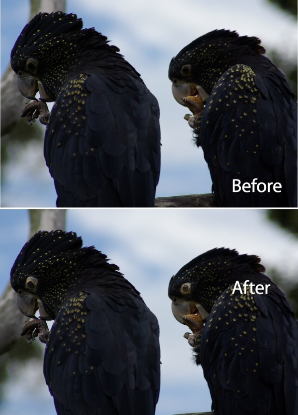 Fixing Animal Eyes in Lightroom