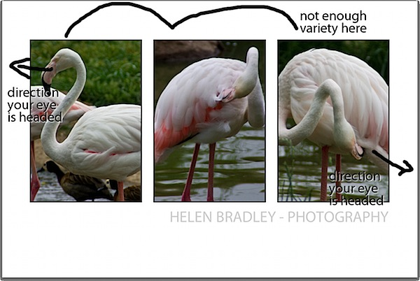 triptych-birdproblem.jpg