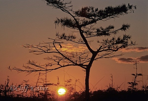 Cliff Kolber_Pahayokee Sunrise 2.jpg