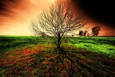The Tree by Terry Shuck