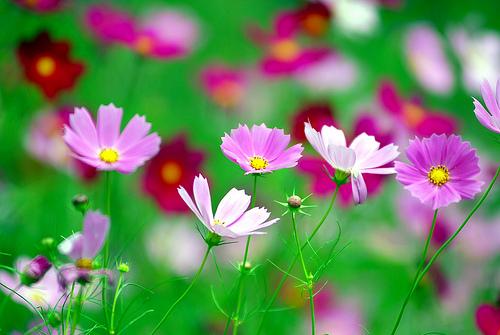 delicious flower photographs, Natural flower