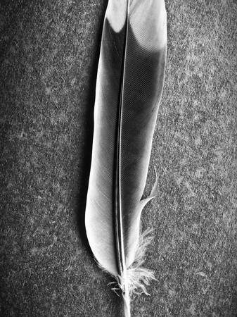 Feather Study by Keith Dotson