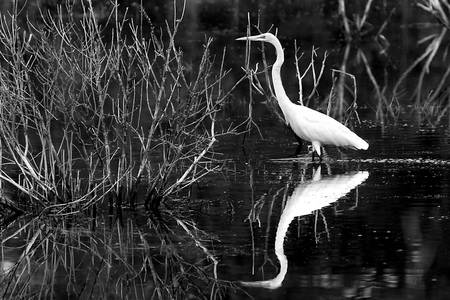 Egret by Scott Hansen