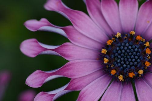 41 Delicious Flower Photographs