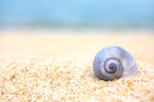 Purple Shell - by alex the greek