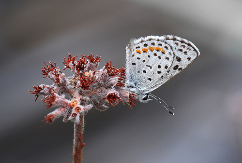 This photo was shot on a cold overcast day. The cold weather kept the butterfly from moving, and allowed me to position my macro lens just a few inches from the butterfly. (Photo by Steve Berardi)