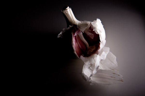 Litepanels MicroPro Review