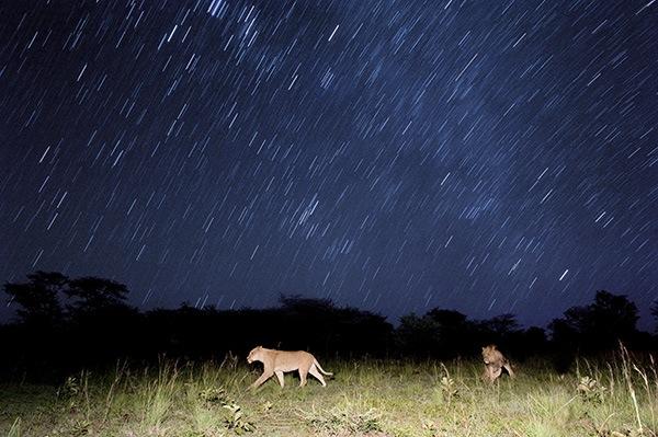 Interview with Wild Life Photographer Chris Weston