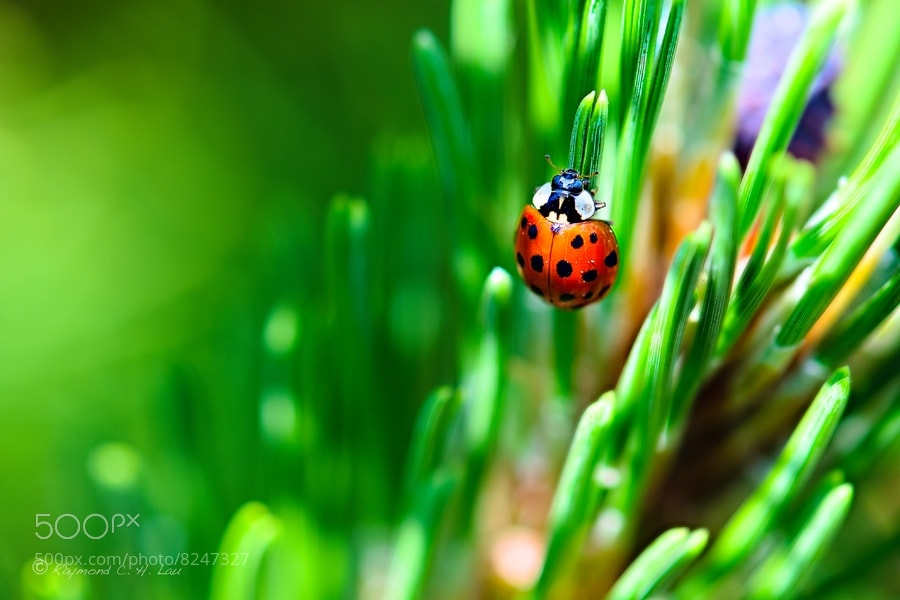 Photograph Red and Green by Raymond Lau on 500px