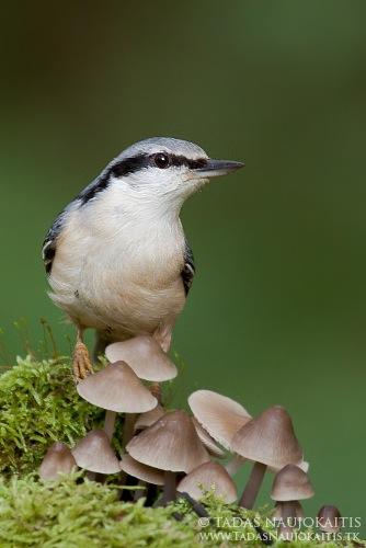 7-birdphotography.jpg
