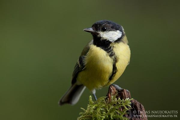 8-birdphotography.jpg