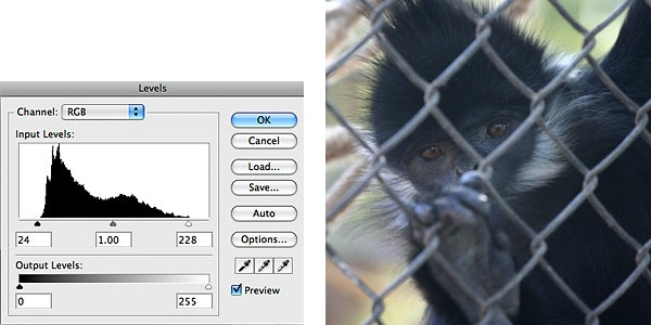monkey_before_300.jpg