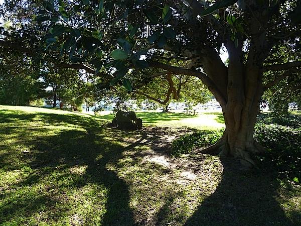 Park wide.JPG