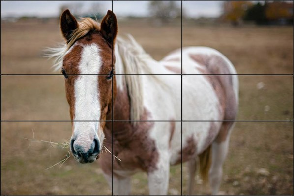 In The Above Example I Placed Slightly More Dominant Eye Of Horse On One Phi Intersections Consider That If Had A Rule Thirds