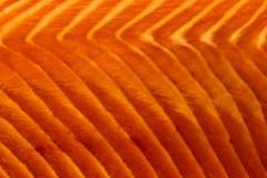 Seeing Salmon