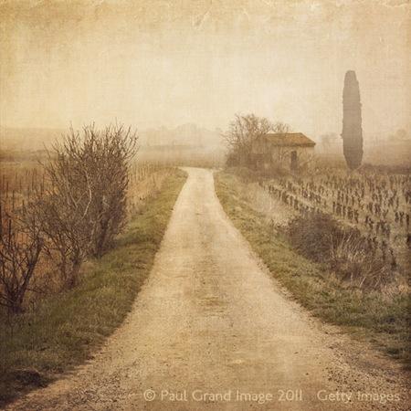 1 Vineyards PG.jpg