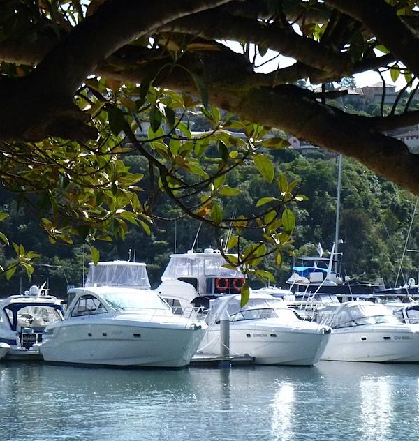 Boats and tree .JPG